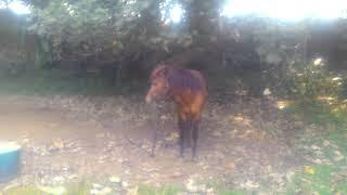 TERBARU....mergokin cewe lagi main ama kuda