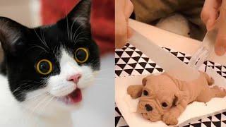 Dog Reaction to Cutting Cake - Funny Dog Cake Reaction #26