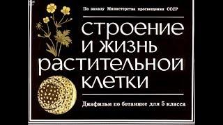 Диафильм Строение и жизнь растительной клетки /по ботанике для 5 класса/