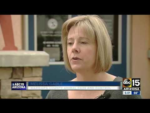 Maricopa County Animal Care and Control has goal of becoming no kill community