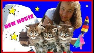 Подбросили котят Новый домик для питомцев