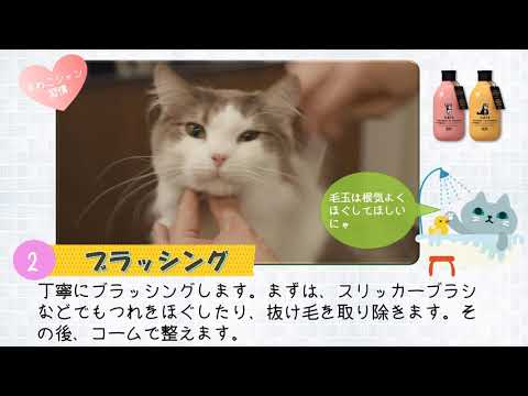 ~猫ちゃんのシャンプー~