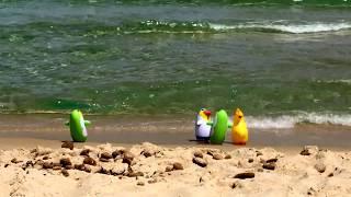 Пингвины на пляжах Сардинии