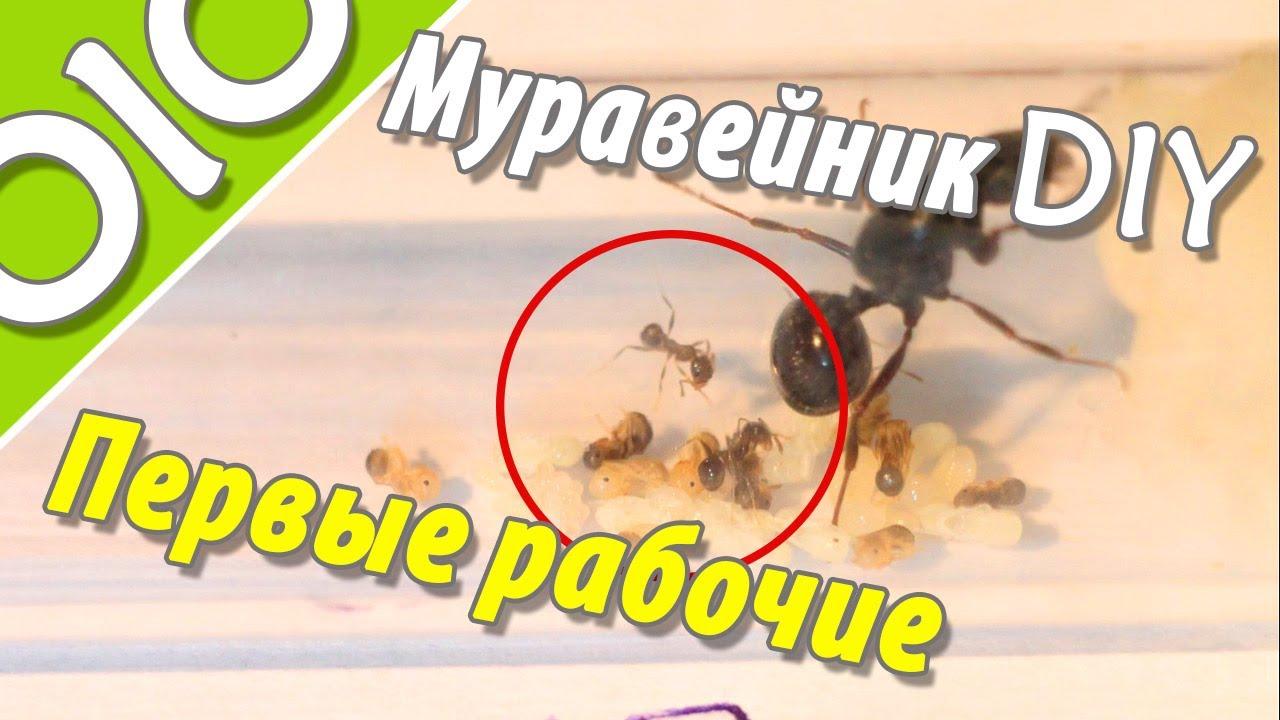 Из чего сделать муравейник своими руками фото 698
