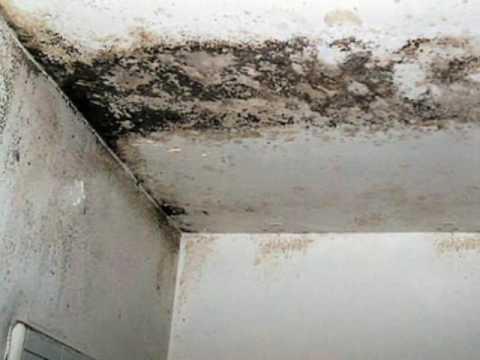 C mo eliminar hongos de paredes eficaz y r pido youtube - Moho en paredes ...