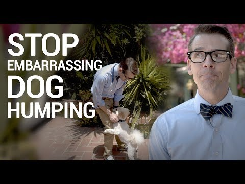 Stop Embarrassing Dog Humping - Training, Timeout and No Punishment Method
