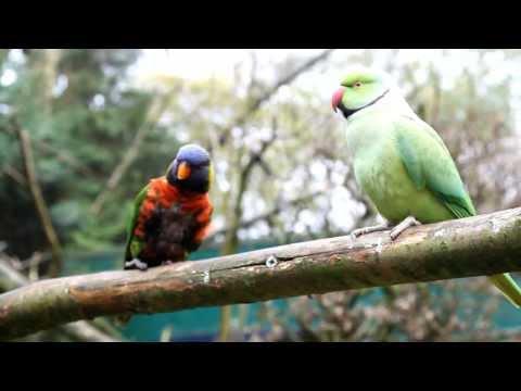 Parrot Zoo - Papegaaien Park (NOP) 2012