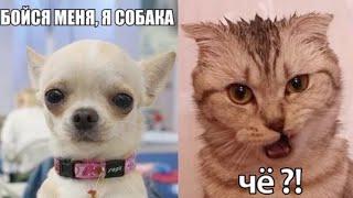 Самые смешные животные Приколы с котами и собаками 2021 14