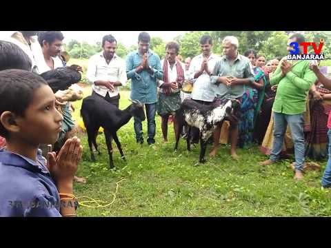 Banjara Culture Seethla Bhavani Festival at Thanda !! Video By Balu Guguloth !! 3TV BANJARAA