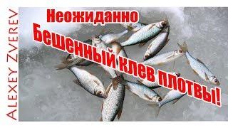 Ловля плотвы. Зимняя рыбалка. Ловля плотвы зимой.