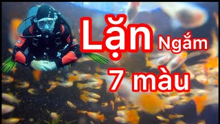 Lặn ngắm các dòng cá 7 màu sẽ như thế nào ? guppy fish