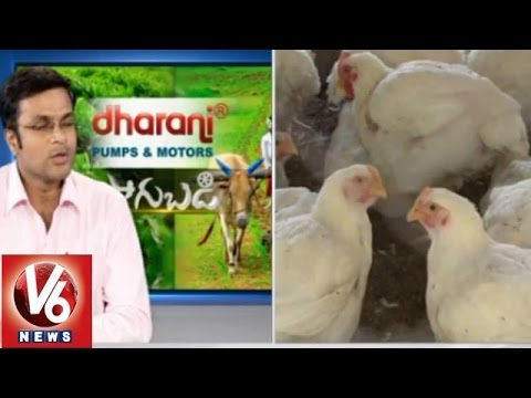 Poultry farming methods - SVU veterinary scientist Hanumatha Rao - Sagubadi