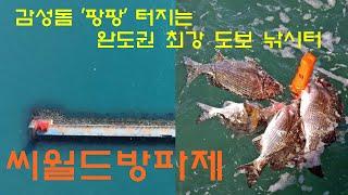 명포인트 항공촬영 27 - 대물 감성돔 터지는 완도권 …