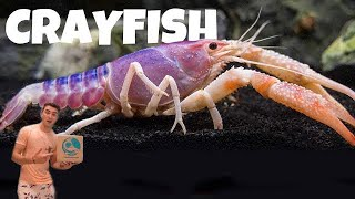 Shopping ONLINE For The Most BEAUTIFUL CRAYFISH ALIVE!
