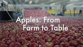 Apples: From Farm to Table