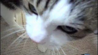 【控えめに甘える猫】Cats are reservedly sweet