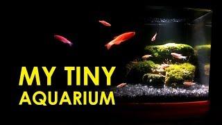 My Tiny Aquarium | Aquarium | beautiful aquarium | how to