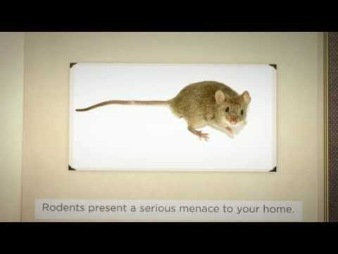 Rodent Control in Davie | Accurate Pest Control, Inc.
