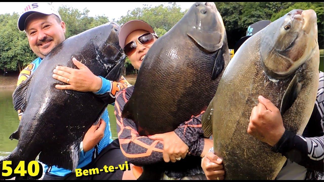 Bem-te-vi - Os grandes tambas na ponta da linha - Fishingtur na TV 540