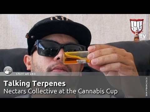 Talking Terps - Nectars Collective at the Cannabis Cup - Smokers Guide TV California