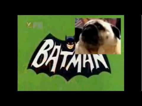 Pug Says Batman