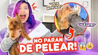 REACCIÓN DE COSMO A MI NUEVA MASCOTA!! SE PELEARON | Leyla Star 💫