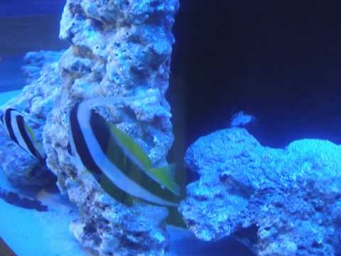 Qatar Marine Exhibition_2010.wmv