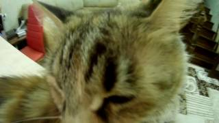 Кошка Ира