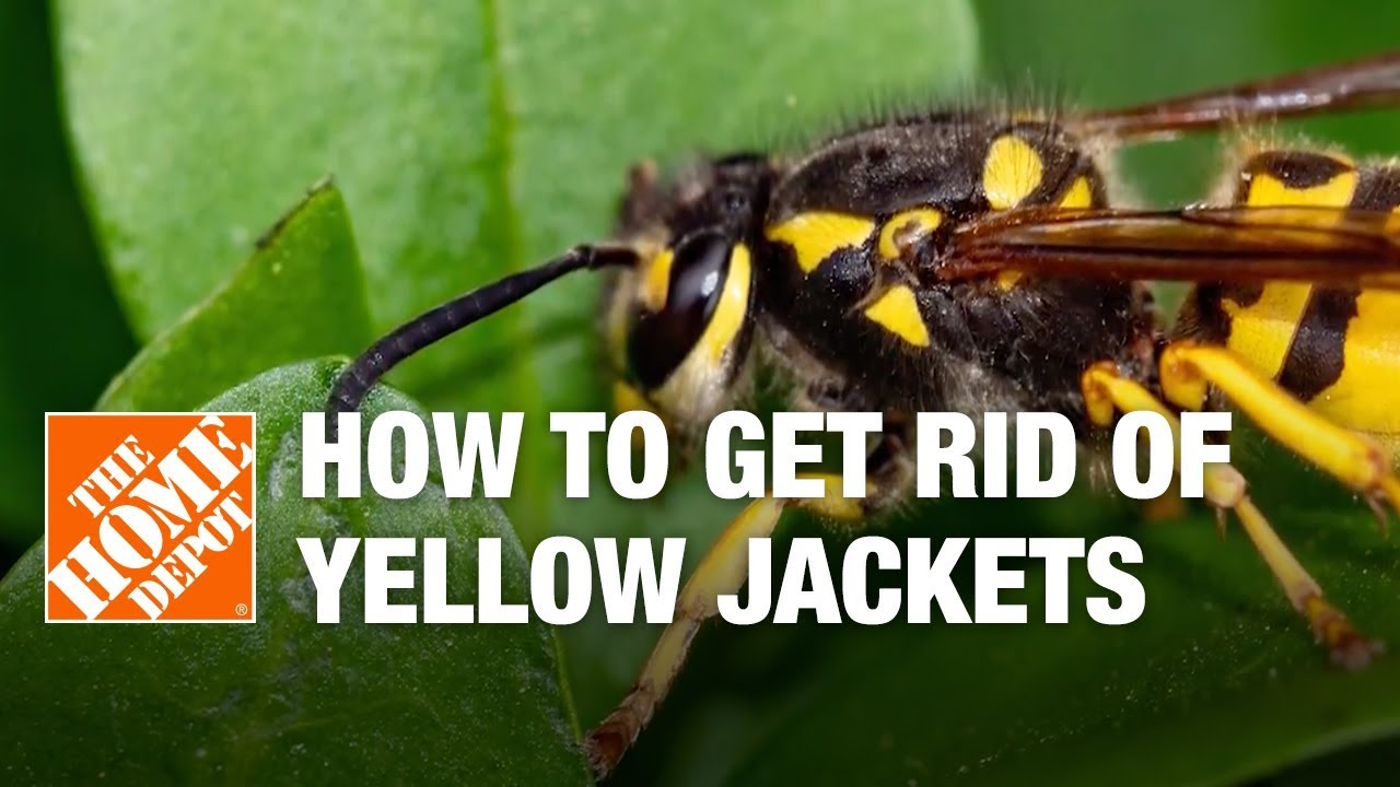 How To Get Rid Of Yellow Jackets The Home Depot