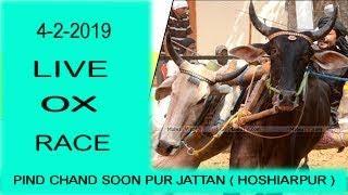 LIVE HALT RACE PIND  CHANDSU JATTAN  ( HOSHIARPUR )  4-2-2019