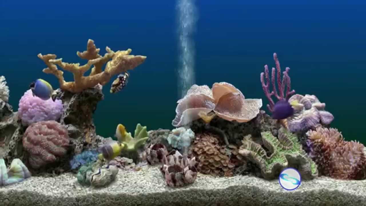 descanso de tela de aquario