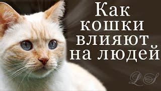 Влияние кошки на человека Как кошки влияют на людей