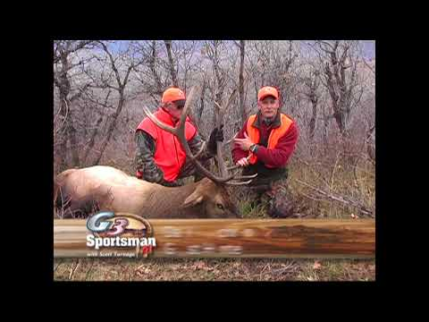 Colorado Big Elk Down/Big Timber Squirrel Hunt