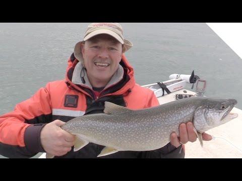 herring hook up