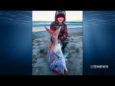 Fishwatch | 9 News Perth