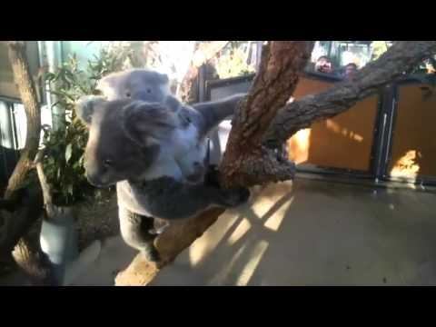 A zookeeper's view  a day in the life of Taronga Zoo through Google Glass