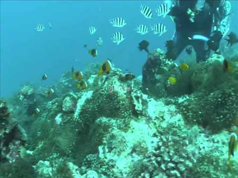 Diving Hideaway Vanuatu