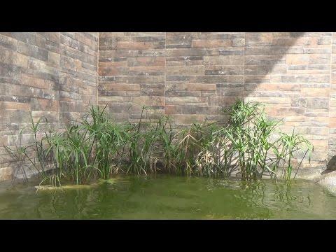 Preparaci n de estanques para peces doovi for Como hacer un criadero de peces
