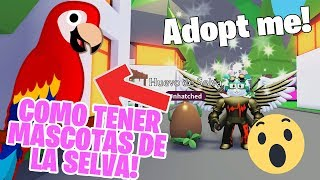 UPDATE 😱 like to have 🦜 SELVA PETS in ADOPT ME ROBLOX!