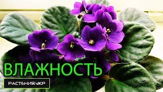 Комнатные растения / Растения плаксы или как узнать о повышенной влажности?