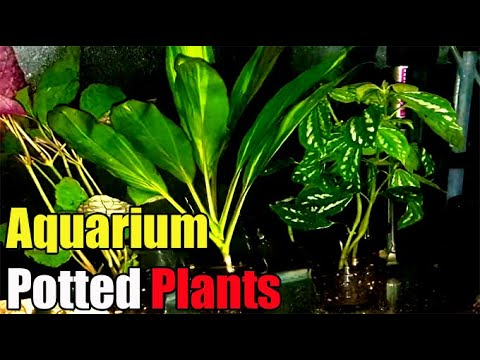 DIY Aquarium Planters (Fish Tank Potted Plants)