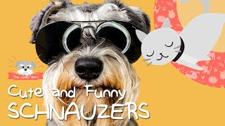 Cutest schnauzers puppies, the funniest pet animal! Compilation dogs vines, 2020