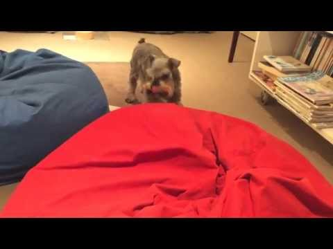 Dog jumping on beanbag