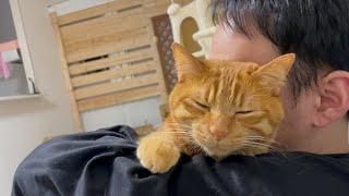 かまって欲しい猫を抱っこしたら離したくなくなりました。