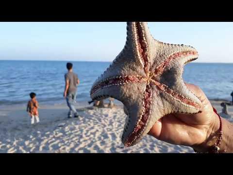 This Starfish (Sea star) is alive!