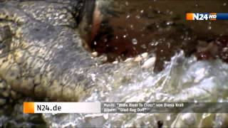 Trailer Supermacht Natur (Massive Nature) Diana Krall Wide River to Cross