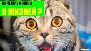 Скачать Почему у кошки 9 жизнеи