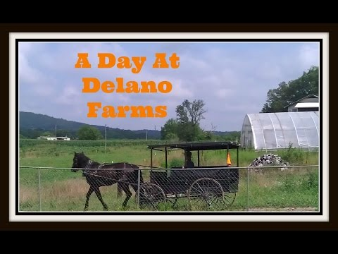 A Day At Delano Mennonite Farms!~