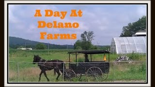 A Day at Delano Mennonite Farms