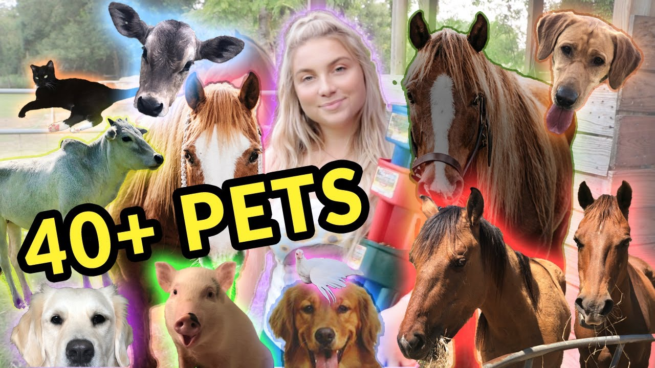 Feeding ALL My Pets in One Video   40+ Pets!
